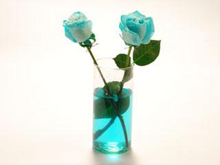 Teñido con tinta a4toner de flores