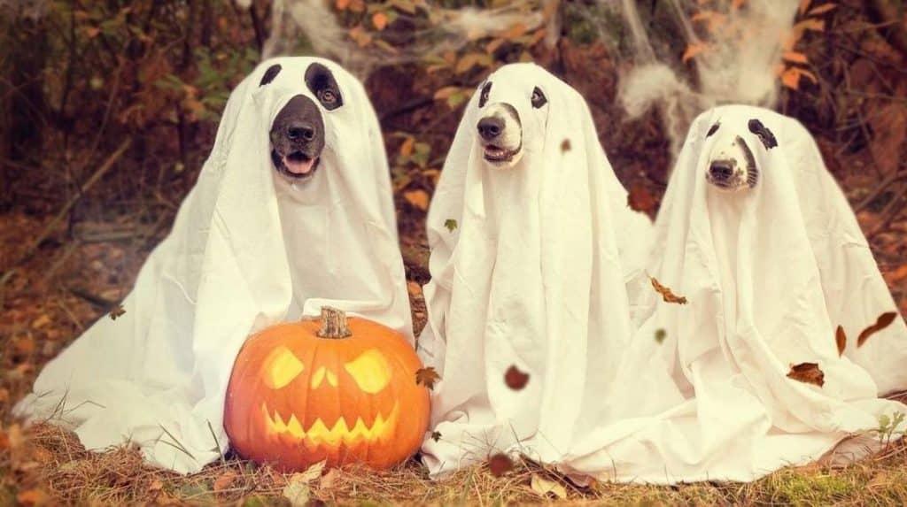 Halloween ofertas